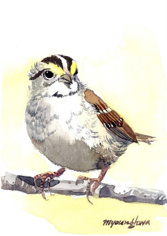 Sammy sparrow ACEO Limited Edition