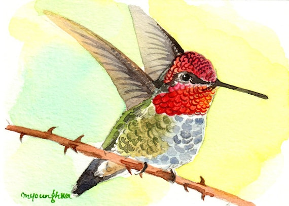 Little speedy ACEO Limited Edition Hummingbird Art print,Gift for her