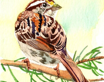 ACEO Limited Edition 1/25- Perching sparrow, Bird print of an original ACEO watercolor, Small gift idea for bird lovers