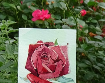 ACEO Limited Edition 1/25- Red rose, Art print of an original watercolor, Small gift idea for her
