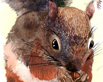 ACEO Limited Edition - Red Squirrel, in watercolor
