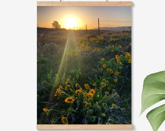 Wild Flowers.Oregon.Wall Art.Sunset.Decor.Arrowleaf Balsamroot.Photo Print.Fine Art Photography.Pacific Northwest.SEVERAL SIZES