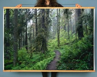 Oregon Forest.Art.Wall Decor.Salmon Huckleberry Wilderness.Fine Art Photography.Mist.SEVERAL SIZES & POSTER prints