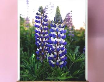 Wildflower Art.Lupine.Oregon.Wall Decor.Purple.White.Spring. Flowers.SEVERAL SIZES