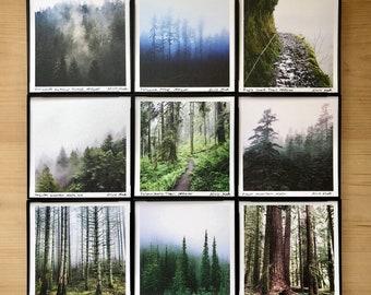 "Oregon Forest Art.9 STYLES.4x4"" Framed Print.Wall Decor.Mist.Forest.Fog.Trees.Rain.SMALL ART"