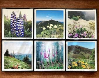 "Wildflower Art. 12 STYLES. 4x4"" framed print.Wall Decor.Mountain.Pacific Northwest.Forest.Oregon.Washington.Desk top art.flowers."