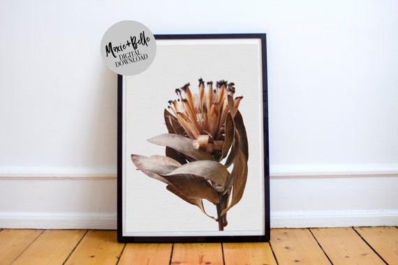 Dried Protea Printable Art