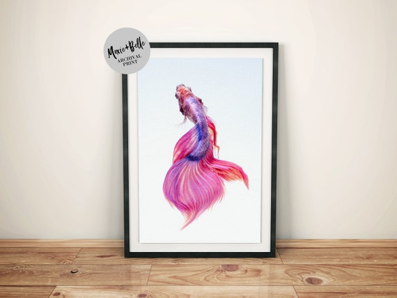 Siamese fighting fish -Shipped Archival Print