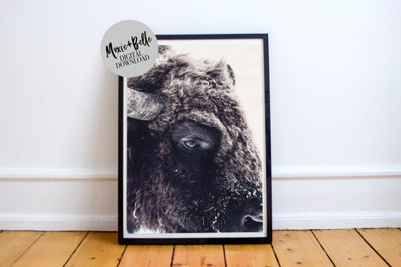 Black and White Bison Printable