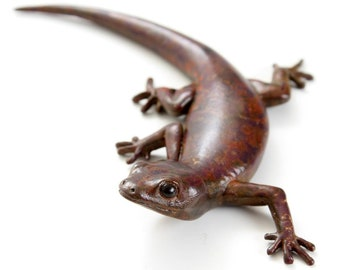 Gecko - size 5, 'c' shape. Bronze. Dark mottled brown patination