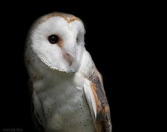 Barn Owl, Bird Photography, Owl Decor, Home and Cabin and Office Decor, Bird Wall Art, Nature Print, Bird Lover Art, Bird of Prey, Black