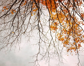Autumn Tree Home Decor, Photography, Yellow Autumn Leaves, Tree Branches, Colored Leaves