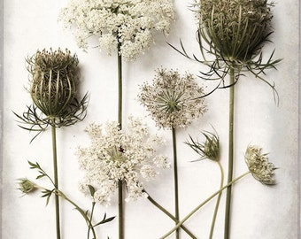 Large Wall Art, Queen Anne's Lace Photo, Flower Photography, Farmhouse Decor, Still Life, Botanical Print, Flower Study, Modern Rustic