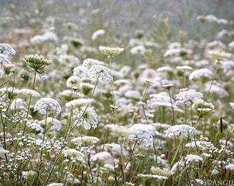 Queen Anne's Lace, Field of Flowers, Summer Flower Field, Flower Photography, Wildflowers,  Nature Prints, Large Wall Art