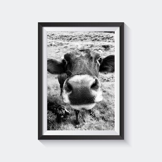 Kuh Schwarz Weiss Poster Islandische Kuh Plakat Etsy