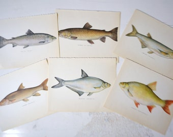 Vintage Lot of Danish Book Plates 1970s Fish Print