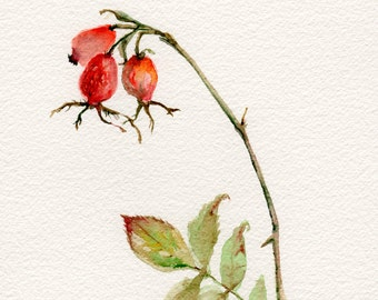 Rose Hip print, Giclee print, 8x10, VerbruggeWatercolor