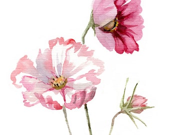 Cosmos flower WATERCOLOR botanic painting Giclee print