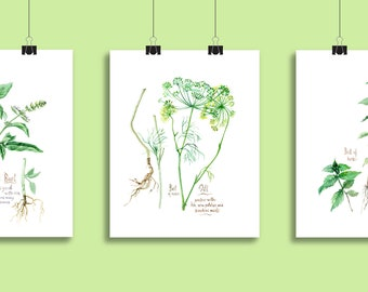 Basil Dill Mint Set of 3 Fine Art prints of original paintings, HERBS and SPICES, Kitchen wall art 8x10 posters