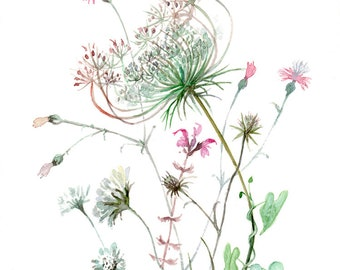 Wild Flowers WATERCOLOR Queen Anne's Lace GICLEE print of original watercolor painting by A. Verbrugge
