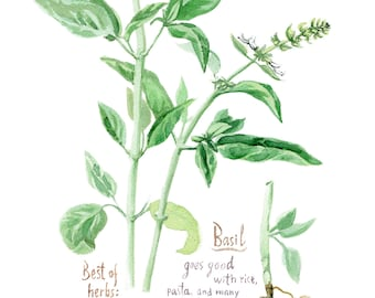 BASIL print, Kitchen wall art, herbs and spices print art posters