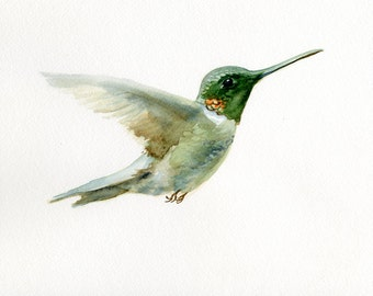 Hummingbird painting, giclee print, fine art print of watercolor original painting