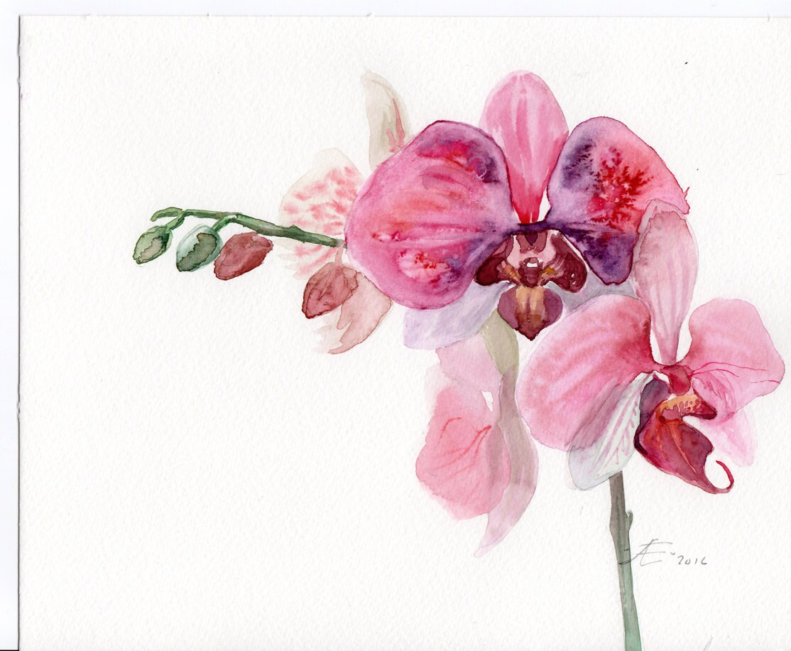 Orchid Original Watercolor Pink Orchid Flowers Painting Etsy