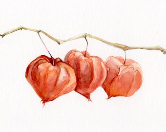 Tender painting of a Chinese Lantern pods, original watercolor, botanic art, gift for her
