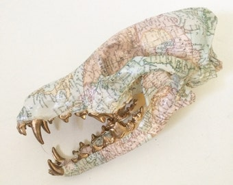custom map print coyote skull with open jaw and gold teeth