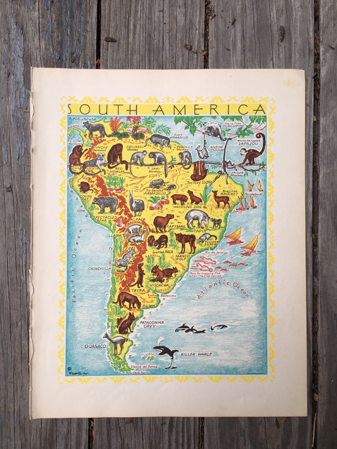 South America Map of Animals / 1930s Animal Wall Art / Kids