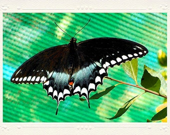 Spicebush Swallowtail Black Patterned Butterfly handmade photo note card
