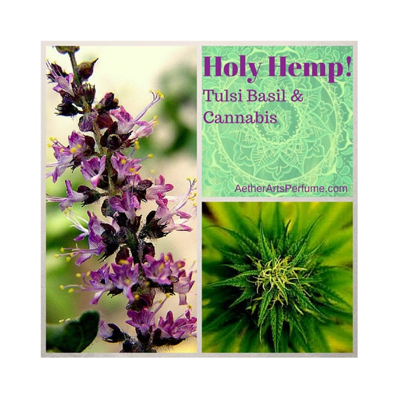 Holy Hemp! Cannabis and Tulsi Basil come together in this bright green Fragrance Oil, a Pot Perfume celebrating the Scent of Fresh Kine Bud.