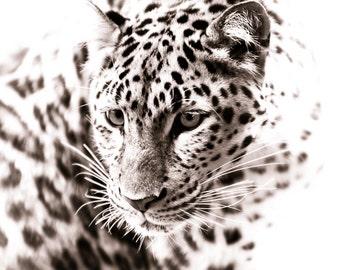 Leopard Art - Monochrome Animal Artwork - Wildlife Home Decor - Wall Art Contemporary Fine Art Photography