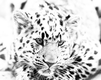 Leopard Cub Art - Monochrome Animal Artwork - Wildlife Home Decor - Wall Art Contemporary Fine Art Photography