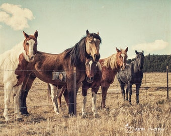 Horse Photography, Wall Art, Equine Decor, Animal Print, Rustic Country Farmhouse Decor | 'A Closer Look'