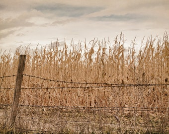 Fall Photography, Rustic Landscape, Autumn Wall Art, Neutral Country Farmhouse Decor, Fence Photograph| 'Rustic Stalks And Wire'