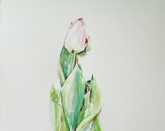 Pink tulip with bulb.Giglee print .A4