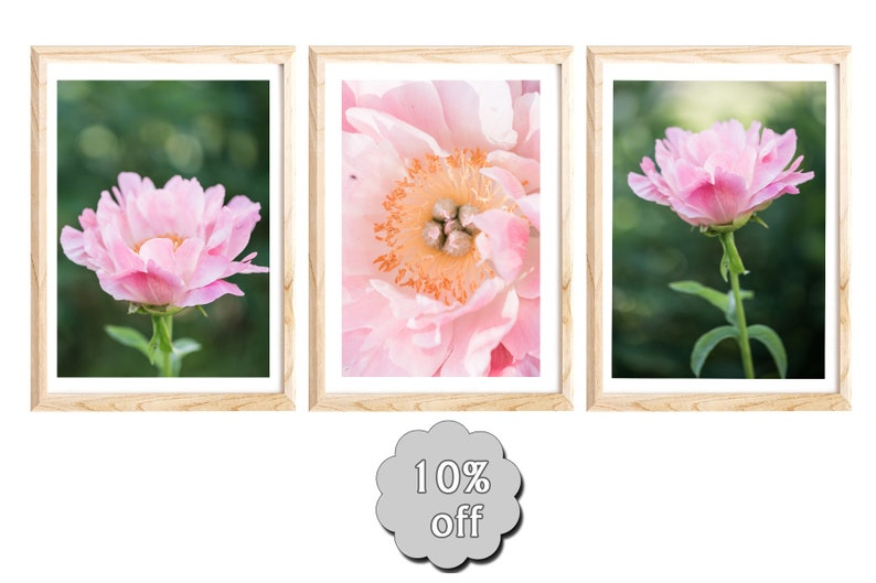 Pink Peony Wall Art Flower Photography Vertical Floral Etsy