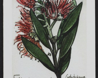 Pohutukawa -- botanical art notecard, blank