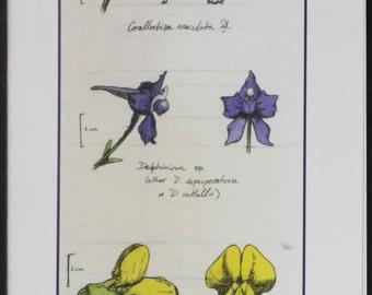 Three Mountain Flowers -- botanical art notecard, blank