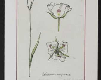 Mariposa Lily -- botanical art notecard, blank