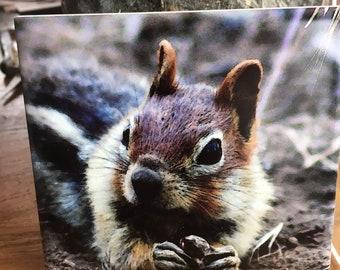 Ceramic Tile - Ground Squirrel 4.25 in x 4.25 in