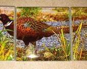 Magnet Set Pheasant  5.25 in x 1.75 in