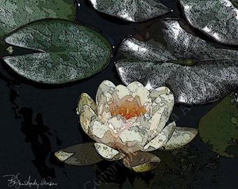 10 White Water Lily Blank Note Cards