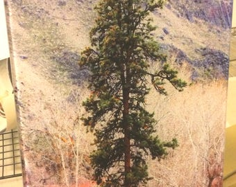 Canyon Pine  Glass Cutting Board -  7.75in x 10.75in