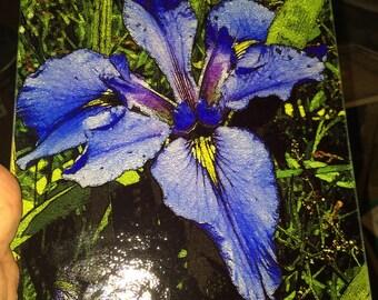 Glass Cutting Board - Blue Iris 7.75in  x 10.75in