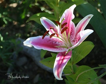 Sale!!!! - 10 Stargazer Lily Blank Note Cards