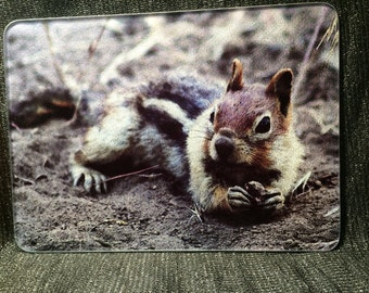 Glass Cutting Board - Golden Mantled Ground Squirrel -  7.75in x 10.75in