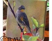 "Ceramic Tile or Coaster  - Yellow Rumped Warbler  4.25"" x 4.25"""