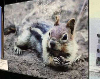Golden Mantled Ground Squirrel -  Large Glass Cutting Board - 12 in x 15 in